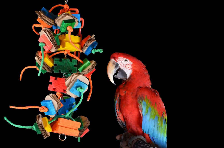 Jouets-pour-votre-perroquet
