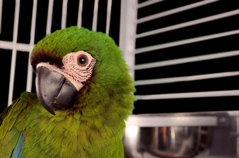 Cages-perroquet