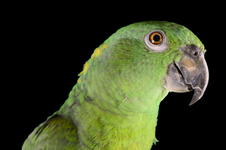 Acheter-un-perroquet
