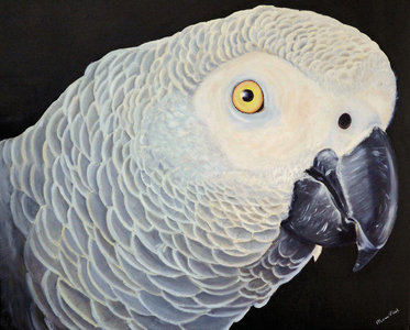 Gray Redstart Peinture à L'huile
